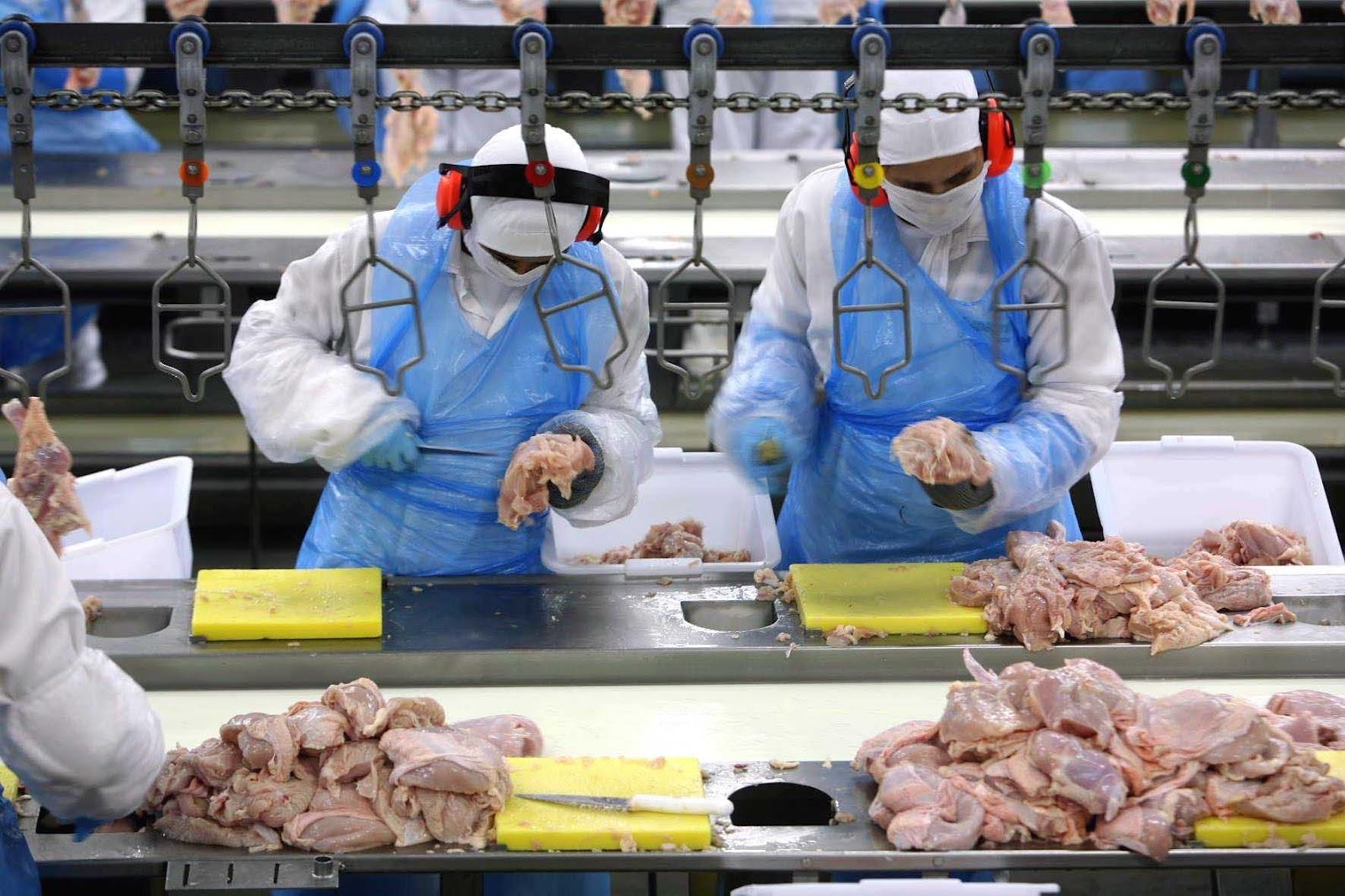 صناعة الأغذية