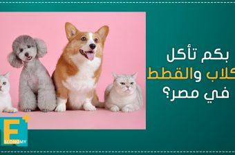 بكم تأكل الكلاب والقطط في مصر؟
