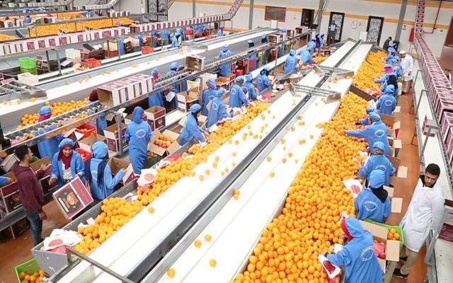 نمت صادرات مصر من قطاعي الصناعات الغذائية والحاصلات الزراعية بنسبة 13.6% خلال أول ثمانية أشهر من العام الحالي 2021.